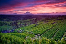 Jatiluwih-Rice-terrace-biggest-rice-terrace-in-Jatiluwih-village-Tabanan-regency-Bali-island-Bali-Hello-Travel-9